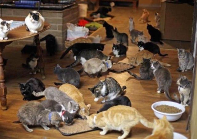 La loca de los gatos (parte 1)